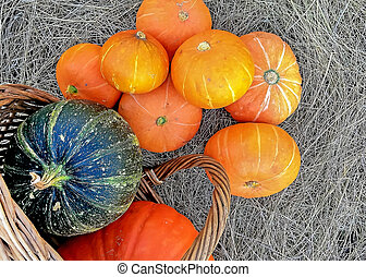 Thanksgiving Day. Pumpkins of different sizes on a grey burlap.