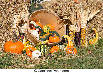 Thanksgiving Day spirit. - Thanksgiving Day spirit - picture...