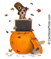 Thanksgiving Dog With Chalk Board