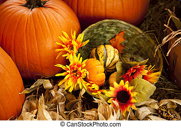 A thanksgiving or fall setting of pumpkins and flowers in the horizontal format.