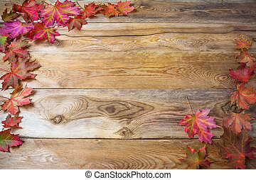 Thanksgiving  greeting background with fall maple leaves