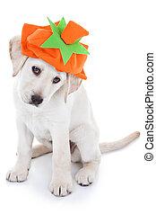 Halloween or Thanksgiving pumpkin puppy dog