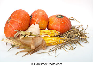 thanksgiving pumpkins with corn and straw on white background