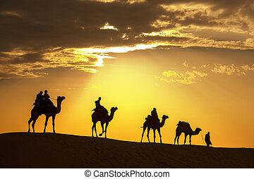 thar, らくだ, によって, 歩く, 支部, 砂漠