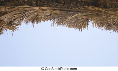 Thatch roof for background -dried straw or cane