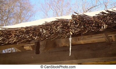 Thaw in spring. Water drips from thatched roof - Thaw. Water...