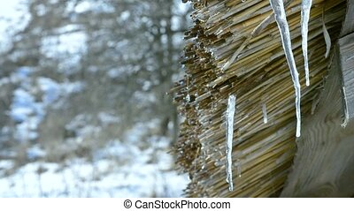 Thaw. Water dripping from wooden thatched shed roof