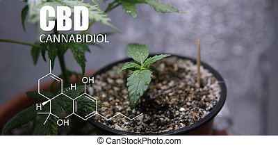 thc, crecer, elementos, pequeño, cannabis, salud, cbd, spaces., cannabinoids, marijuana