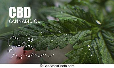 thc, crescendo, elementos, pequeno, cannabis, saúde, cbd, spaces., cannabinoids, marijuana