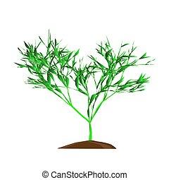 the, 树, 带, 绿色, leafage, 在上, a, whie, 背景, 矢量, 描述