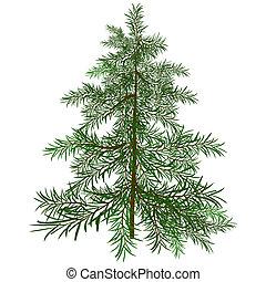 the, 綠色, 圣誕樹