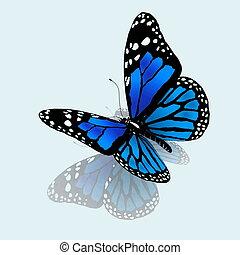 the, 蝴蝶, 在中, 蓝色, 颜色
