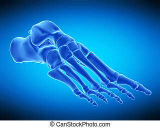 the, 骨骼, 腳