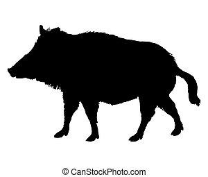 the, 黑色, 黑色半面畫像, ......的, a, 野豬, 在懷特上