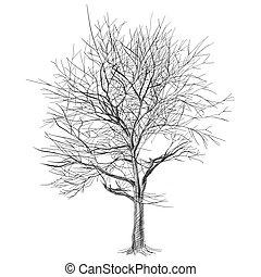 large bare tree without leaves (Sakura tree) - hand drawn - ...