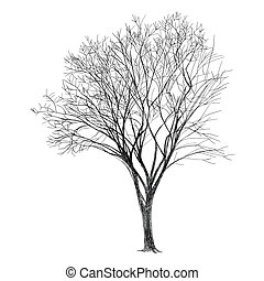 Tree - Hand Drawn