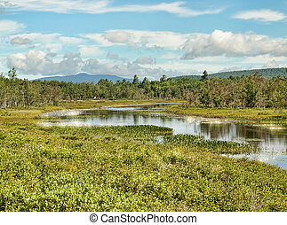 The Adirondack State Park off Route 8 near Oxbow Lake