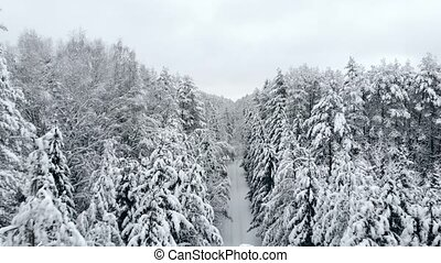 The Aerial camera flies over samnam pine forest in snow...