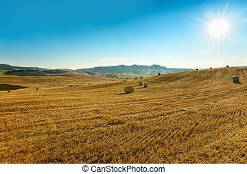 The agricultural landscape in Tuscany - Italy