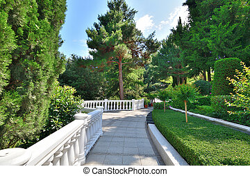 The Alley in a beautiful coniferous park