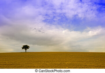 the alone tree in the fields