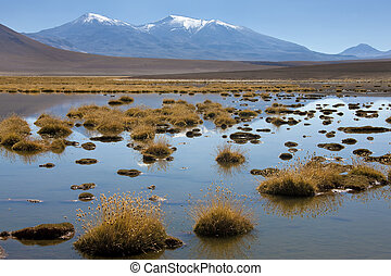 The Altiplano in the Atacama Desert - Chile - A brine lagoon...