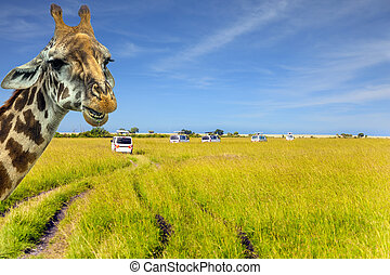 The amusing giraffe