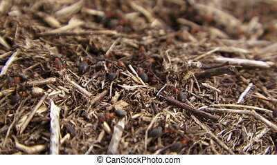 The ants defend the nest