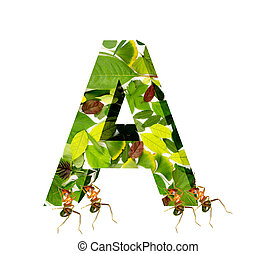 ants - The ants move the letter A