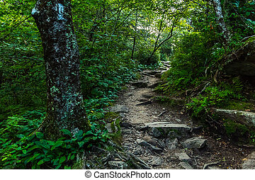 The Appalachian Trail as it crosses the Smoky Mountains in...
