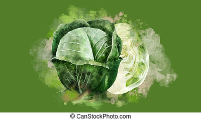 The appearance of the cabbage on a watercolor stain. - The...