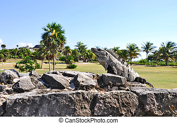 the archaeological site of tulum in mexico