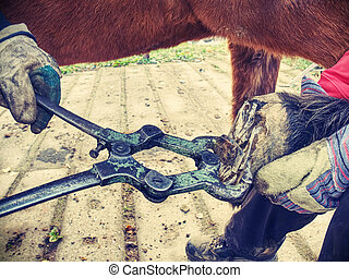 The assistant hold horse leg for hoof clearing.