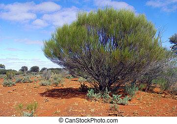 The Australian bush