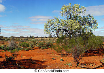 The Australian bush in the western australia