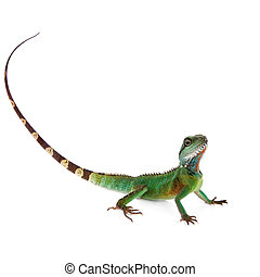The Australian water dragon on white background - The...