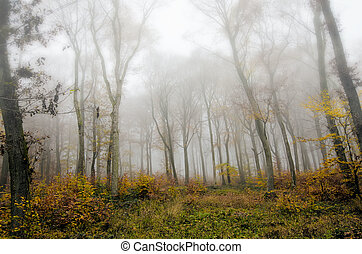 the autumn forest in the mist