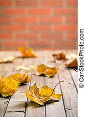 autumn leaves on wooden table