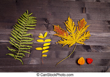 the Autumn Leaves over a Natural Dark Wooden background. Old dirty wood tables or parquet with knots and holes and aged partculars.