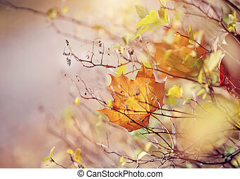 The autumn maple leaf of yellow color