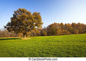 The autumn nature