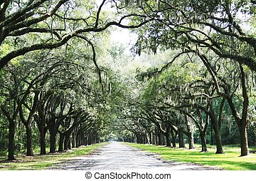 The Avenue at Wormslow Plantation, Savannah, GA.