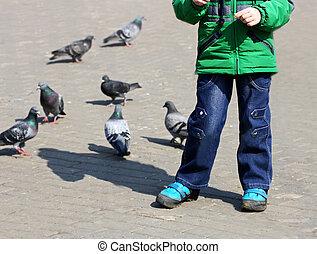 Boy feeding the pigeons.