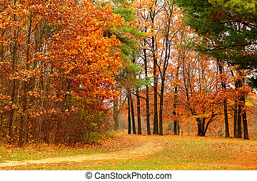 The background of bright autumn scenery in the park