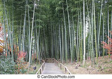 the bamboo forest in Kodai Ji temple in Kyoto - bamboo...