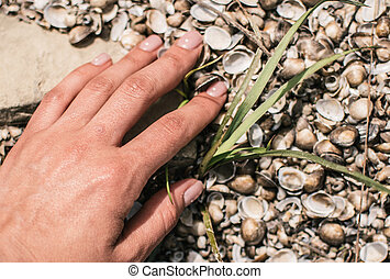 The bank of the river is covered with shells. Hand touches the texture