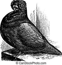 The Barb or English Barb, vintage engraving.