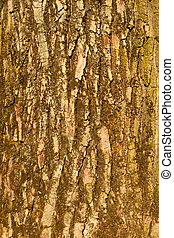 The bark of big old tree