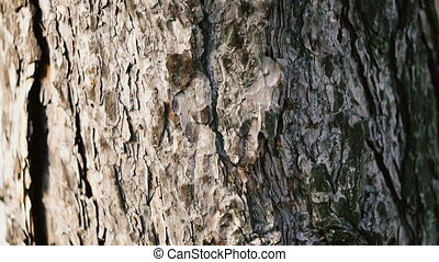 The bark of the tree on which ants crawl