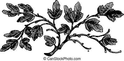 The barren fig tree, vintage engraving. - The barren fig...